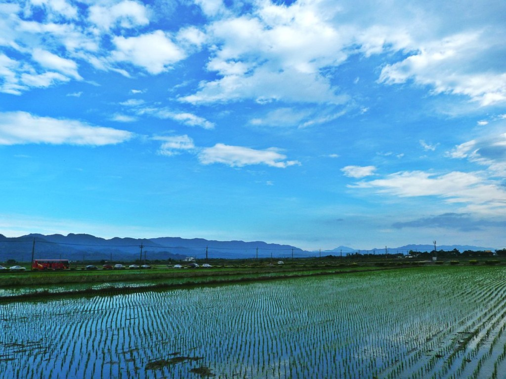 Fengbin Rice Field Taiwan