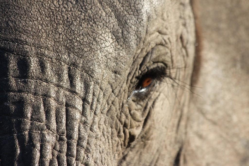 Elephant Shamwari Game Reserve